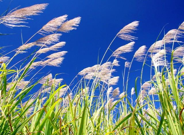 Simply Sugarcane....